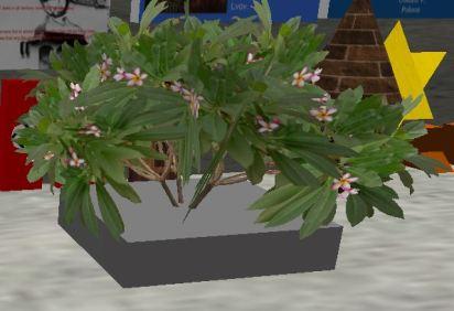 gavin-plant-representing-freedom