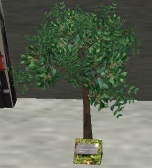 kylee-tree